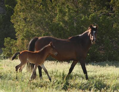 Wild Horses2 NM