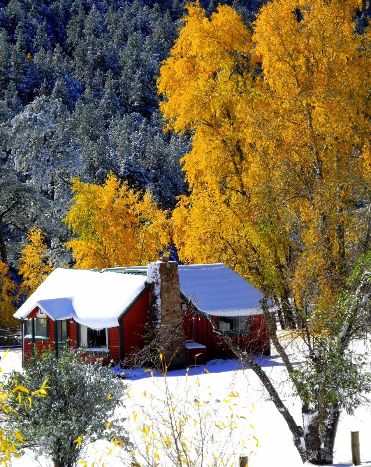 Grady Yellow Pine Cabin1