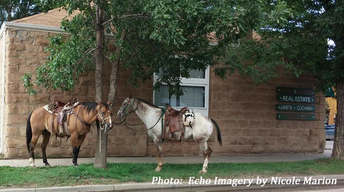 HorsesInLaVeta NM credit
