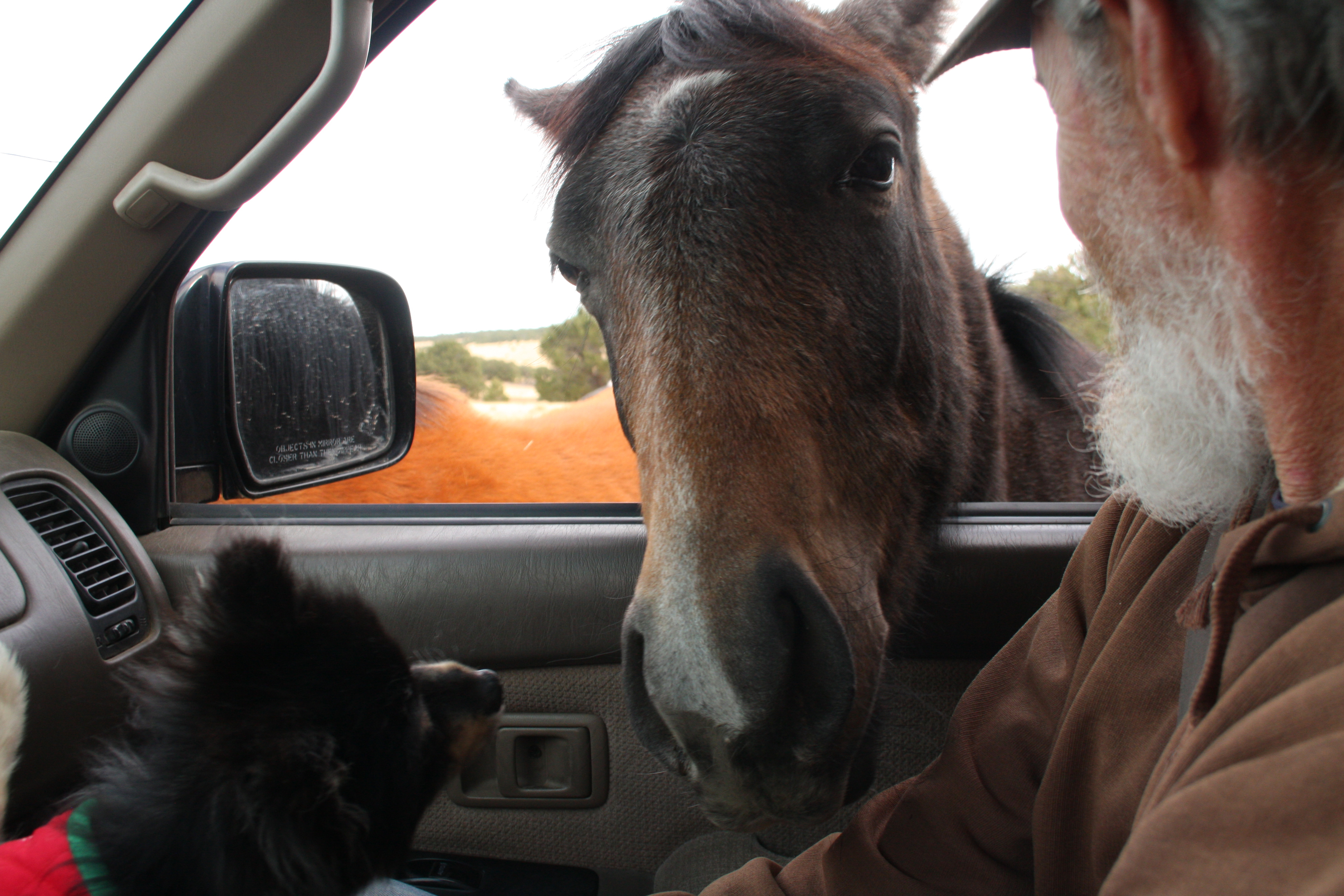 Wild Horse Greeting NM rs